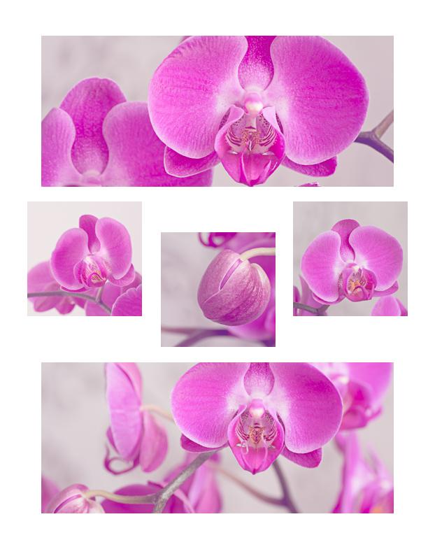 orhidee väike